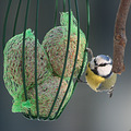 blue tit bird winter luxembourg
