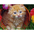 cat puzzle animal cute