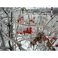 berries ice hudsonriver landscape