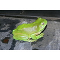 frog on bbq
