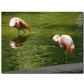 netherlands amersfoort zoo reflection flamingo bird nethx amerx zoox animx birdx