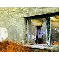 Same ruined house, close by mine ...