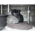 kittens kittys cats felines cute animals pets domestic sleepy black_and_white