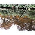 netherlands baarn tree water reflectionthursday nethx baarx treex waten