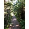 This is what the forest looks like. It is a small patch of woods between St. Anne's campus and St...
