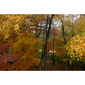 trees autumn leaves colors foliage mellie