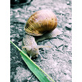 snail animal ground leaf grass