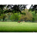 tree horse meadow