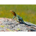 Went to the mountains again today...this lizard was enjoying the hot sun down at the lake.