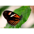 butterfly insect nature wings closeup macro