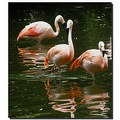 netherlands amersfoort zoo reflectionthursday bird nethx amerx zoox animx birdx