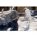 seaworld orlando florida bird ibis seal rocks