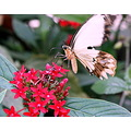 butterfly brown movement flowers red leaves green