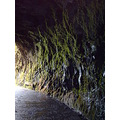 2009 portugal madeira saovicente ribeiradoinferno old tunnel rock plants water