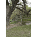 State Parks Trees Fences
