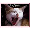cat feline animal fear terror yawn