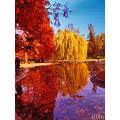 park colours reflection autumn archer