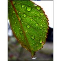 green rain drops balis barbara