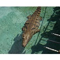 vacation africa bridge crocodilles