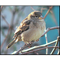 birds house sparrow