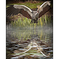 crain flood photoshop birds nature