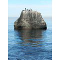 birds sitting on a rock