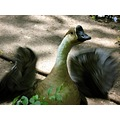 wild life duck pond zoo animal summer vasca
