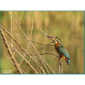 Here is Mrs. Kingfisher