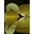 paintpictures fruit still
