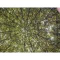 The roof of a 'shrubbery house'  at the Amstelpark. (2002) A kind of shrubbery the Knights who sa...