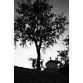 bw tree church aegina island