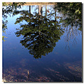 pine reflection pond