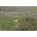 SJWildlifeArea Birds reflectionthursday roncarlin