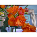 freesia sweetsmelling