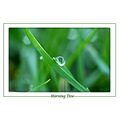 grass macro dew waterdrop