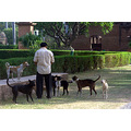 zespook lucknow india dogs