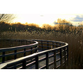 boardwalk shapwick heath somerset landscape