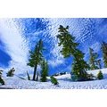 snow tree mountain sky