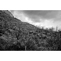 Mt. Charleston, Las Vegas, Nevada.