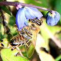 animal bee blue flower