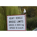 I wonder if this seagull was checking everyone was following the rules