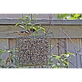 backyard birds roncarlin nature