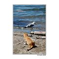 cat seagull summer chase sea