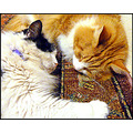 friendfriday cats pets milibuhscatclub liescatsclub