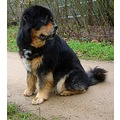 netherlands bussum animal dog nethx bussx animx dogx mastx