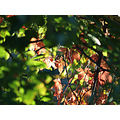 leaves autumn trees tree green nature