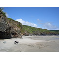 dog beach cornwall