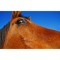 horse animal eye wideangle
