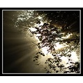 light heaven silhouette tree leaves fog somerset somersetdreams
