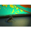 insect abstract peterpinhole